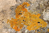 Lichens on rock — Stock Photo