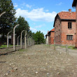 Auschwitz concentration camp — Stock Photo #8690871