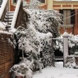 Backyard under snow — Stock Photo #8987556