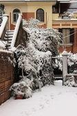 Backyard under snow — Stock Photo