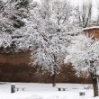 Winter snow in park — Stock Photo