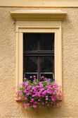 Renaissance window with flowers — Stock Photo