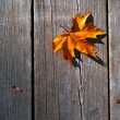 Yellow wet autumn leaves on the background a dark old wood — Stock Photo #8175460