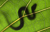 SNAKE ON A GREEN LEAF — Stock Photo
