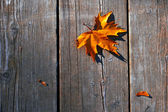 желтый мокрой осенние листья на фоне темного старого дерева — Стоковое фото