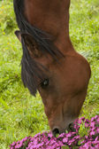 Horse head And Flowers — Stock Photo