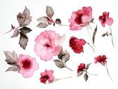 花 — ストック写真