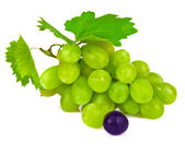 Grape berries isolated on white background — Stock Photo