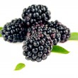 Blackberry fruit closeup — Stock Photo