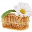 Honeycomb and flower blooming medical chamomile — Stock Photo