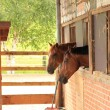 Horses looking out of stable — Stock Photo #10524098