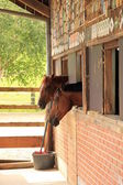 Horses looking out of stable — Photo