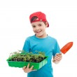 Boy with tomato seedlings in tray and small gardening spade — Stock Photo