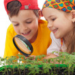Kids learning to grow food - Stok fotoğraf