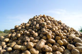 Pile of potatoes — Stock Photo