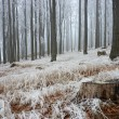 Stock Photo: In frosty beechwood