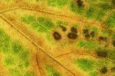 Leaf autumn — Stockfoto