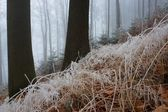 In misty wood — Stock Photo