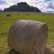 Stock Photo: Silage