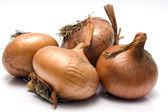 The Onion — Stock Photo