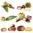 Collection of nuts — Stock Photo #8065937