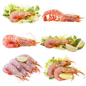 Collection of shellfish — Stock Photo