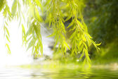 Reflection of the leaves in water with glitter — Stock Photo