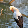 Stork standing near water — Stock Photo