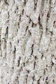 White bark — Stockfoto