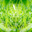 Stock Photo: Green grass panorama
