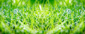Green grass panorama — Stock Photo