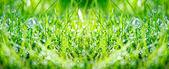 Green grass panorama — Stock Photo