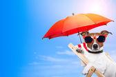 Cão, banhos de sol em uma cadeira de deck — Foto Stock