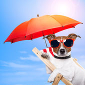 Hond om te zonnebaden op een ligstoel — Stockfoto