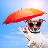 Perro tomando el sol en una tumbona — Foto de Stock
