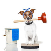 Cleaning Dog — Stock Photo