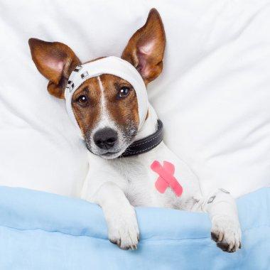 Sick dog with bandages lying on bed