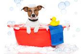 Plastik ördek ile renkli küvette banyo köpek — Stok fotoğraf