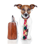 Dog with leather bag — Stock Photo