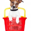 Dog in a red and yellow shopping basket — Stock Photo #10548095