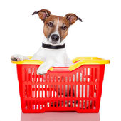 Dog in a red and yellow shopping basket — Stock Photo
