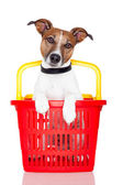 Dog in a red and yellow shopping basket — Stok fotoğraf