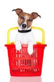 Pes v červené a žluté nákupní košík — Stock fotografie