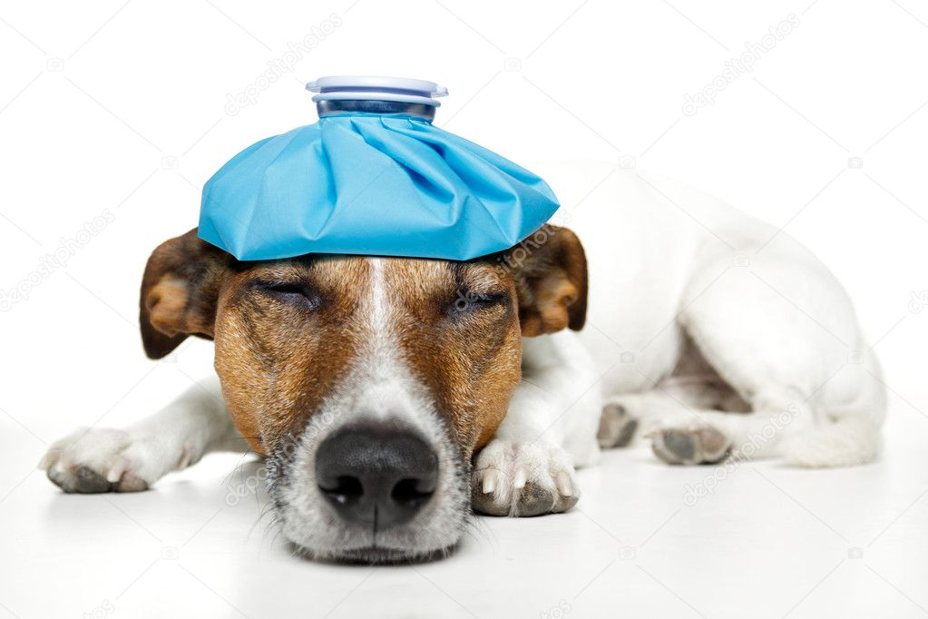 Dog feeling sick  Stock Photo #8514497