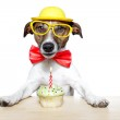 Dog with cupcake — Stock Photo #8752338