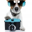 Dog camera — Stock Photo #9202361