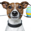Dog with spoon and easter egg — Stock Photo #9339963