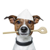 Chef dog with cooking spoon — Stock Photo