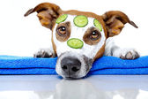 Dog with blue towel and a cream mask — Stockfoto