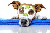 Perro con toalla azul y una máscara de crema — Foto de Stock